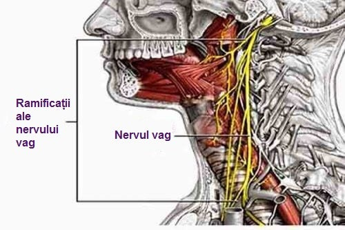 Stimularea nervului vag al urechii