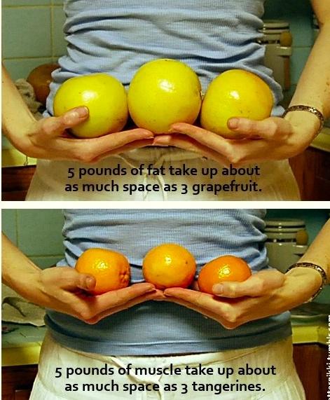 Importanța procentului de grăsimi corporale și a pierderii în greutate